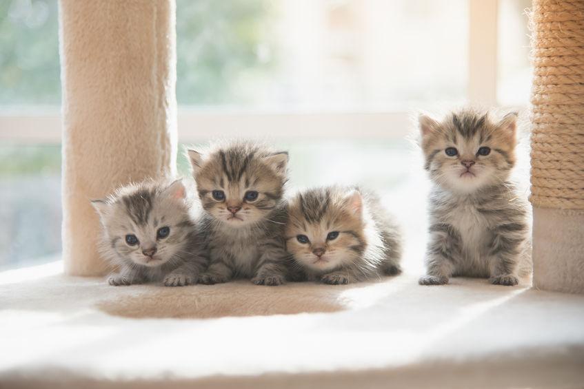 ciekawostki o kotach