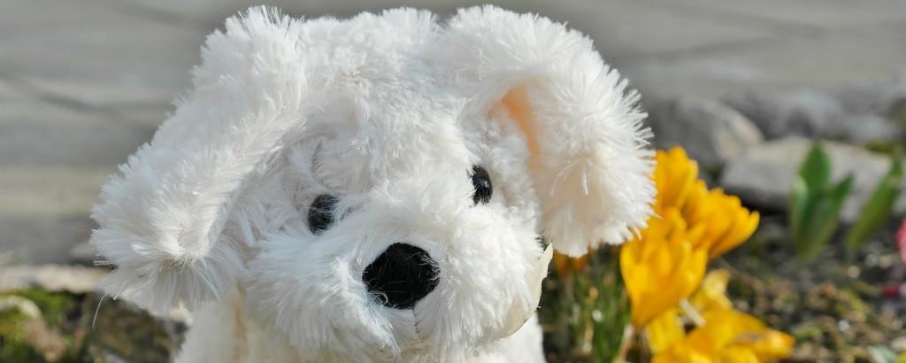 robo-pies pomaga osobom z demencją