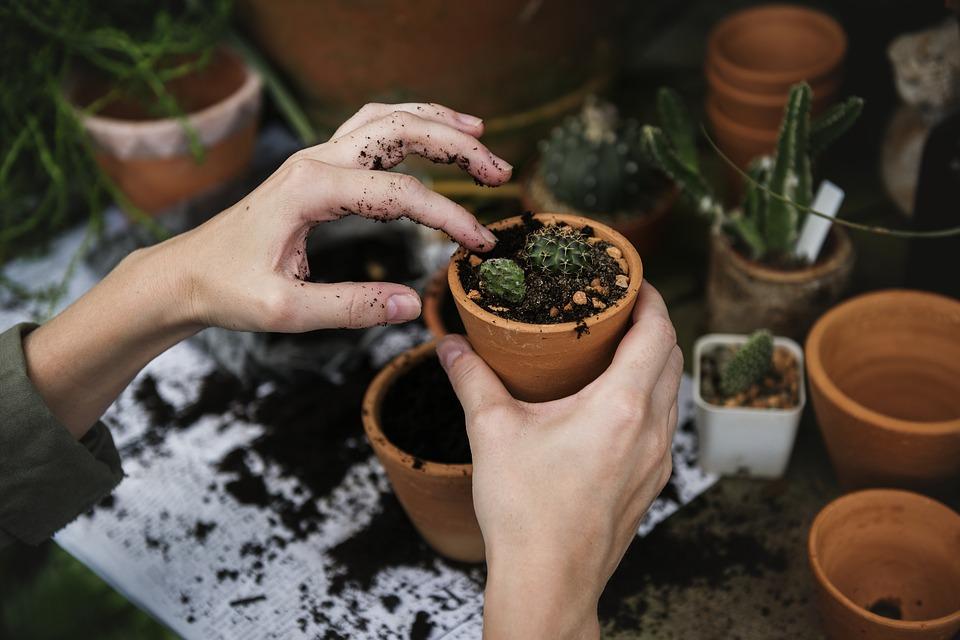 Rok w ogrodzie czyli sposób na codzienną medytację