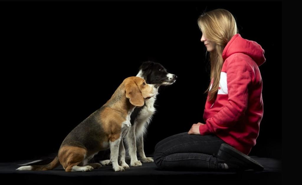 Pies – najlepszy przyjaciel rodziny?