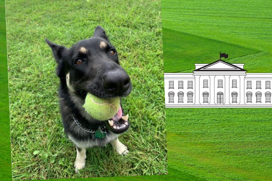 w Białym Domu zamieszka pies ze schroniska